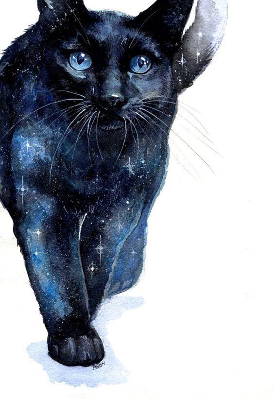 Star cat.jpg