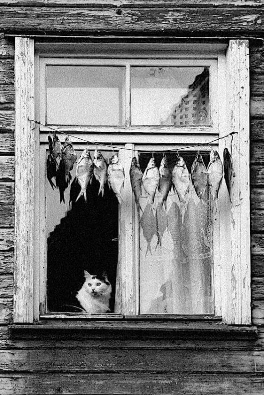 Cat, fish.